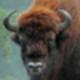 Аватар пользователя zubropasnii