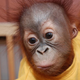 Аватар пользователя Papuasovich
