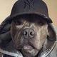 Аватар пользователя Yazlayaco6aka