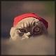 Аватар пользователя KotMatpoc