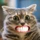 Аватар пользователя StepanKapustaaa