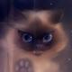 Аватар пользователя SpringSun