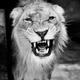 Аватар пользователя Liongate