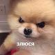 Аватар пользователя AsikaArris