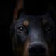 Аватар пользователя Zloy.Doberman
