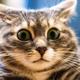 Аватар пользователя MercuriusM
