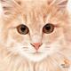 Аватар пользователя murkosha