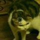 Аватар пользователя rediso4ka