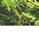 Аватар пользователя CannabisM