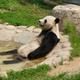 Аватар пользователя PandaKoshka