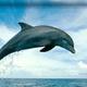 Аватар пользователя dolphinarium
