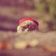 Аватар пользователя hc5d