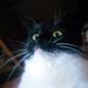 Аватар пользователя allyn