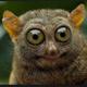 Аватар пользователя pawokzapawok