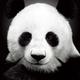 Аватар пользователя r3goff
