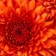 Аватар пользователя nbikor1990