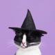 Аватар пользователя laloka