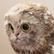 Аватар пользователя EleCtroNick17