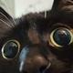 Аватар пользователя myasnoitortik