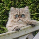 Аватар пользователя tecsys