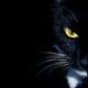 Аватар пользователя AlexandrGLIGL
