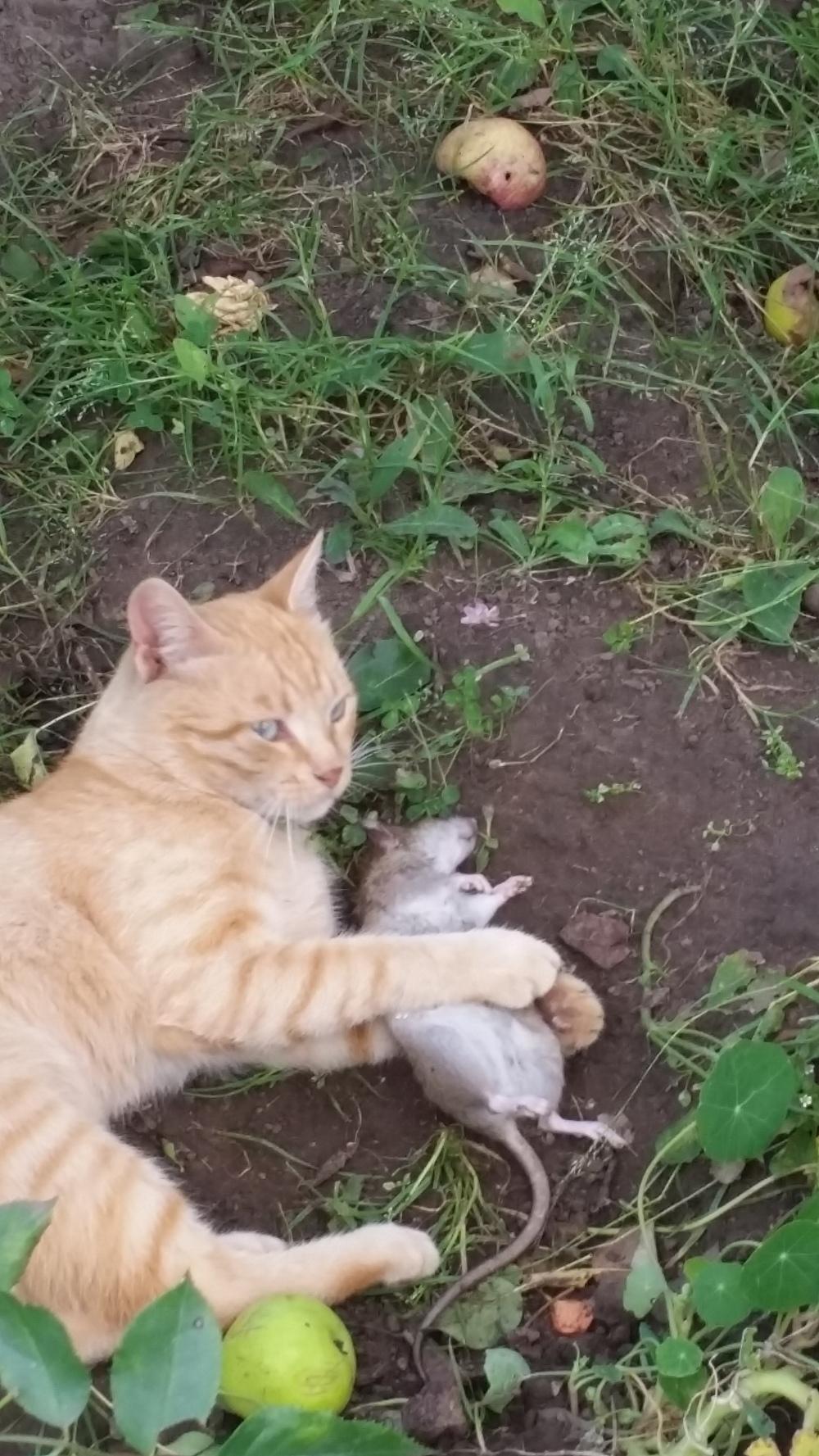 Картинки кот трахает мышь фото 116-502