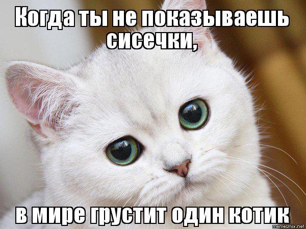 Я соскучилась по коту