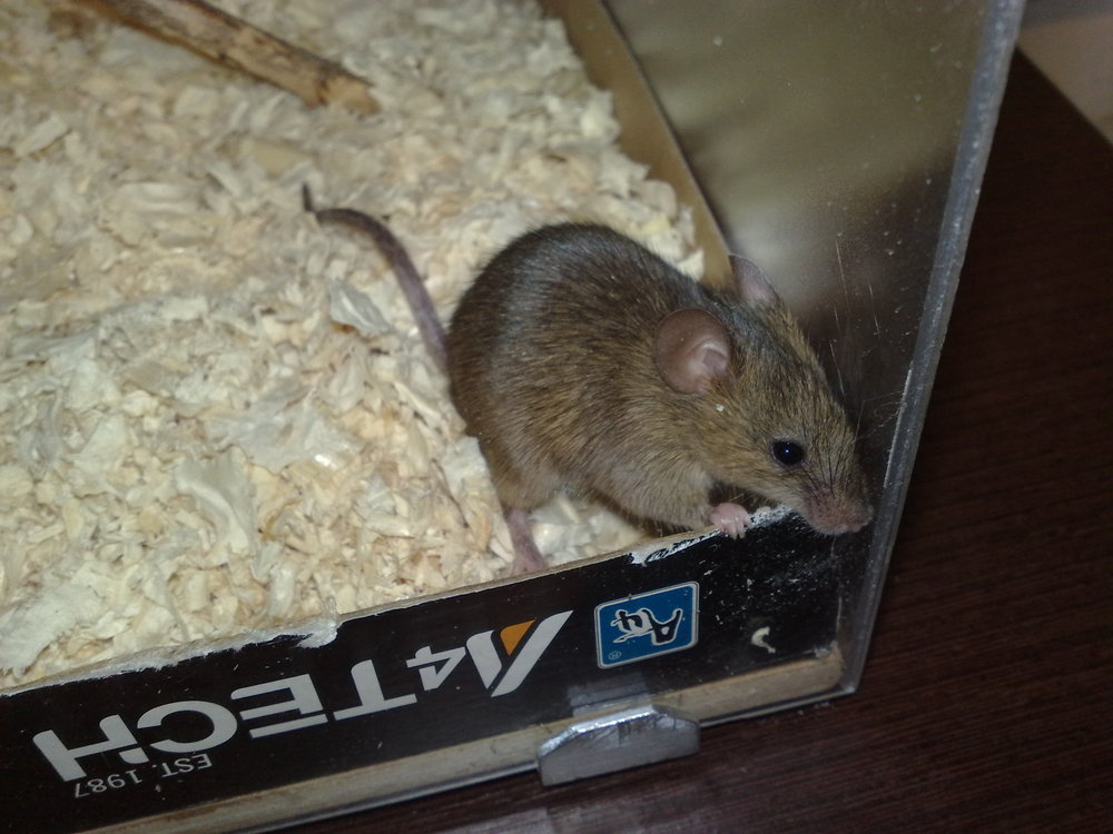 В нашем насрали мыши