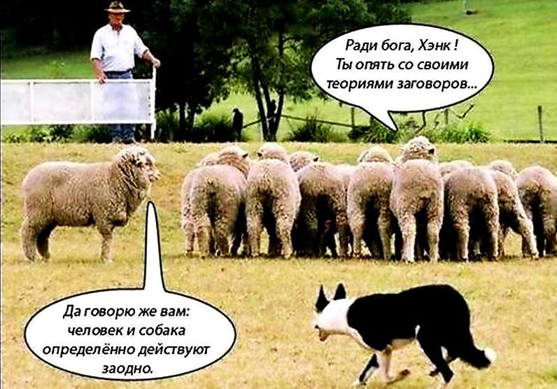 Постуха ебет овцы