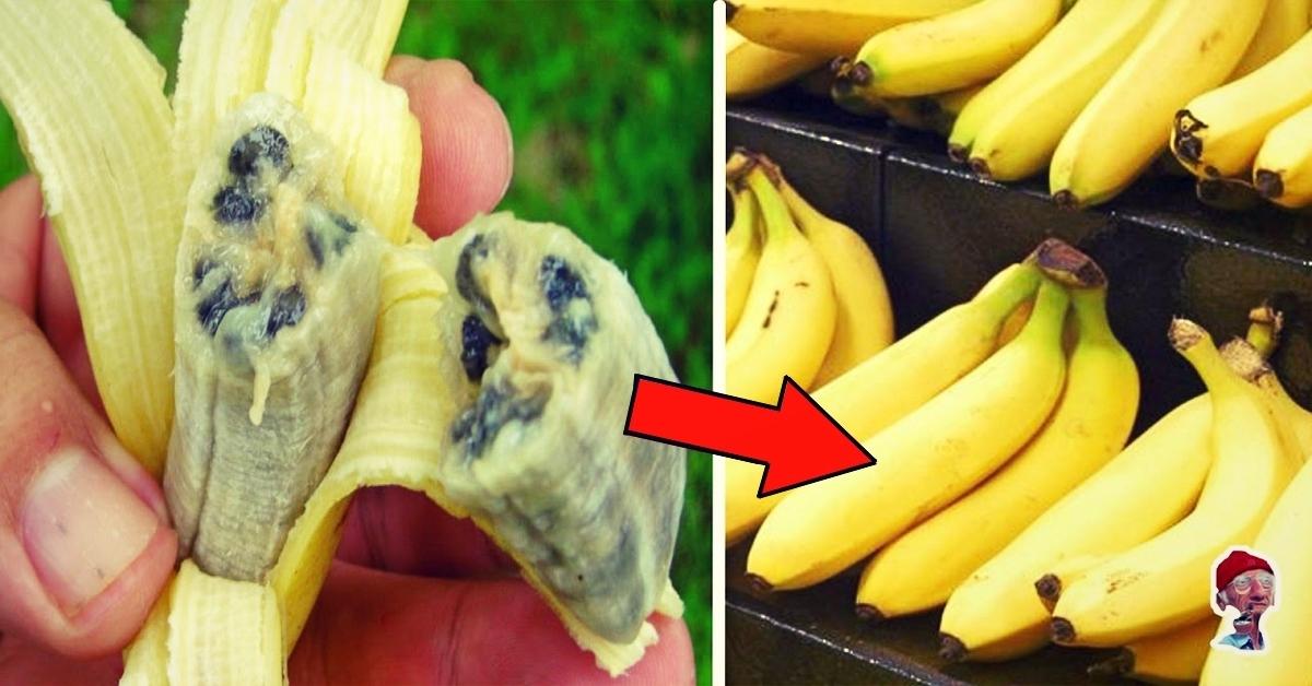 Порно вместо банана предложил другой банан