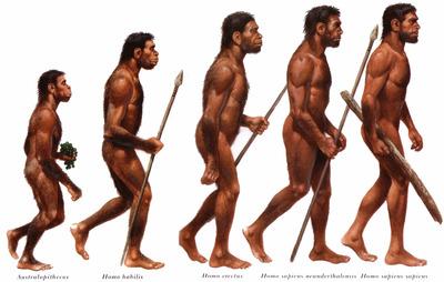 почему у человека появилось прямохождение и потеря волосяного покрова