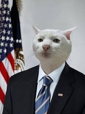 Я подсел на кота