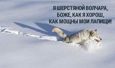 Да пошел он нахуй волчара