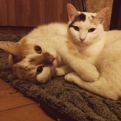 Как орут коты при драках