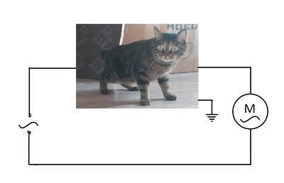 Перерезали кота