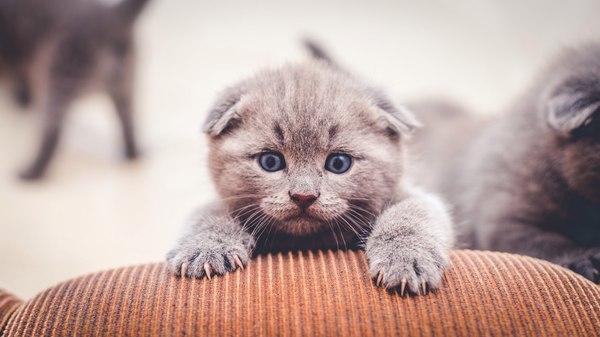 Поснимал котят на продажу ) Совсем малыши. Снято на Sony A7 + Minolta 50f17 Sony A7, Minolta 50f17, Кот, Мяу, Мур, Длиннопост