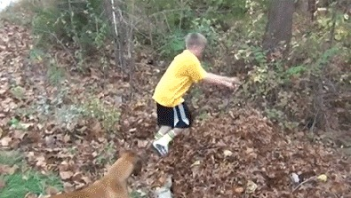Не прыгайте в кучу листьев Ответ, Гифка, Прыжок, Листья, Не мое, Batslut