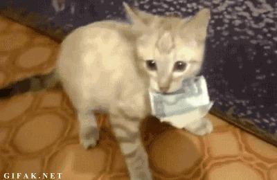 Истории про животных Кот, Лига Добра, Животные, Помощь, Истории из жизни, Гифка