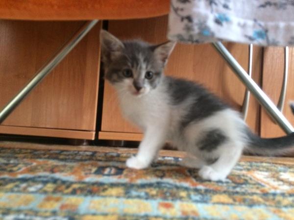 Ищем хозяина для котёнка Кот, Потерялся кот, Ищу хозяина, Потеряшка, Длиннопост, Санкт-Петербург