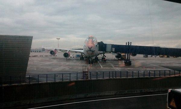 Полосатый рейс