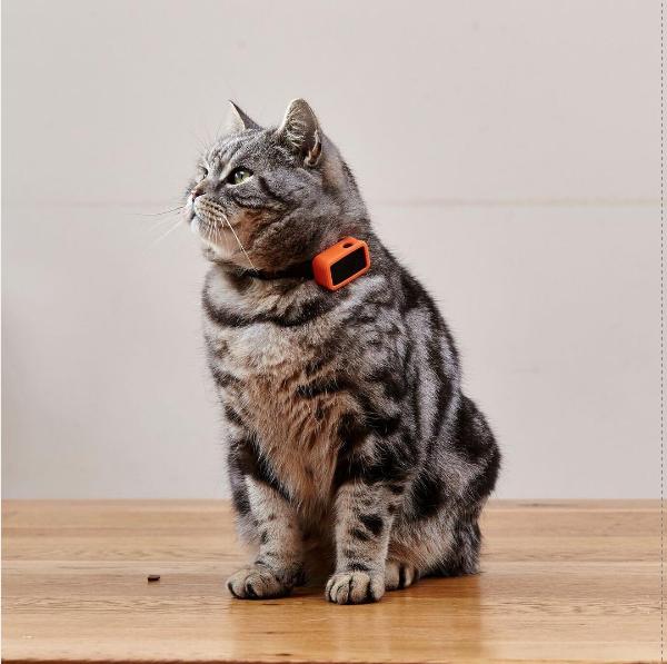 G-paws - первый GPS-фитнес трекер для домашних животных Ошейник, g-Paws, Трекер, Кот, Домашние животные