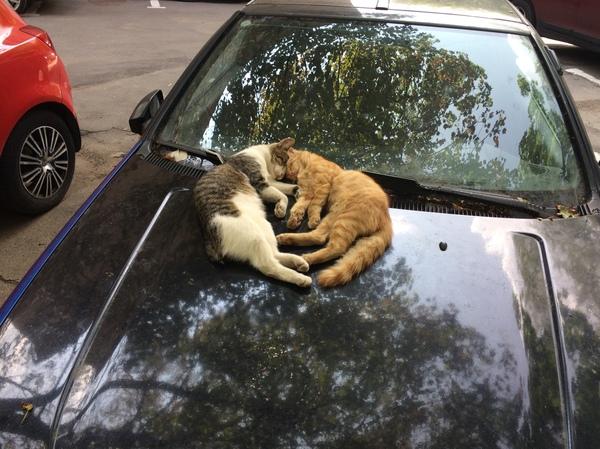 Всем добра и котиков