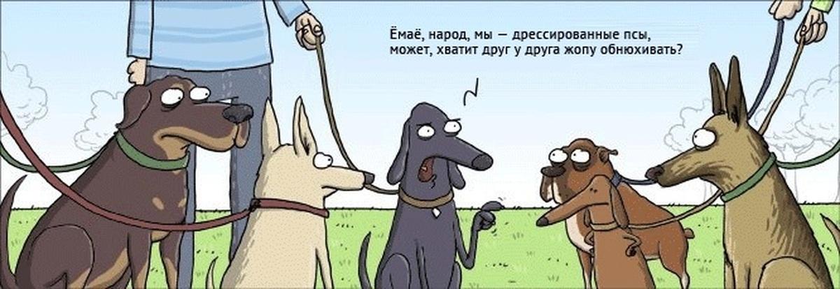 Лет, шутки про собак в картинках