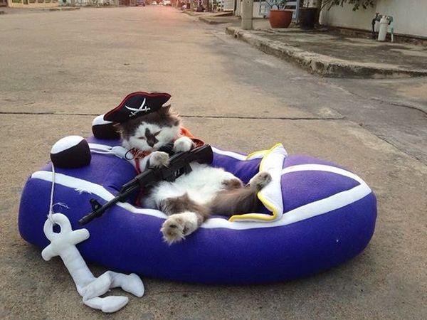 Кот по имени Ритчи, живущий в Бангкоке, стал лидером группы чихуахуа, живущих с ним в одном доме кот, Стая