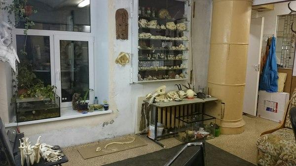 Моя работа) Работа, мастерская, череп, кости, таксидермия, резьба, моё, длиннопост