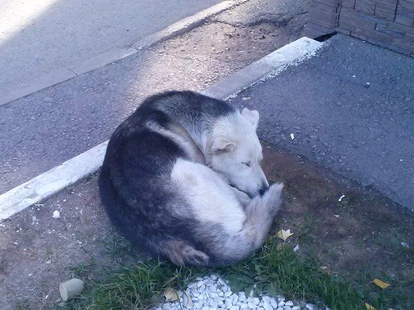 Г. Уфа, найдена собака Собака, Найдена собака, Уфа, Помощь