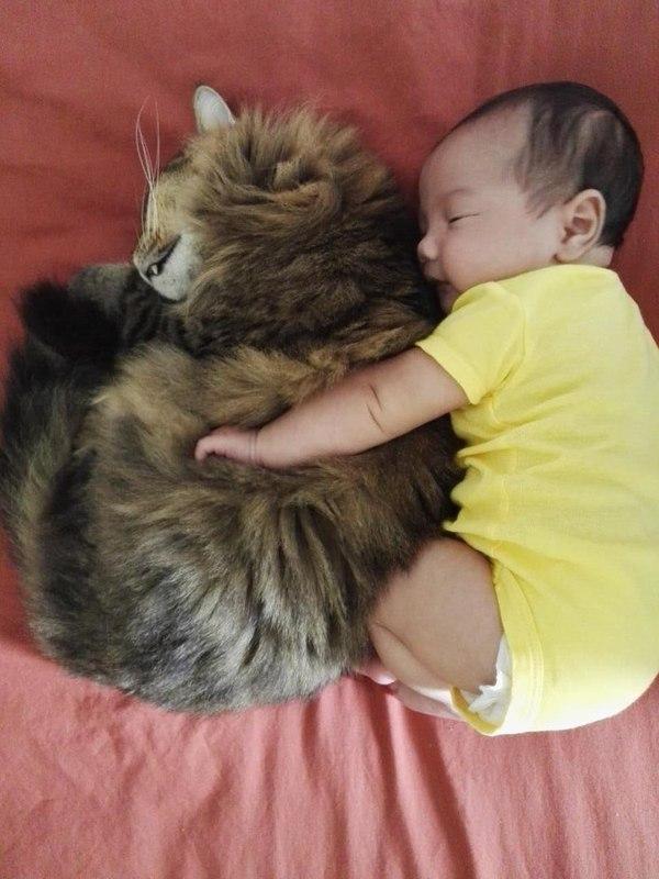 Жена прислала фотку. Пока я был на работе, кот присматривал за ребёнком.