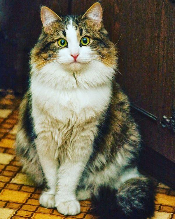 Кот, который гуляет где хочет....