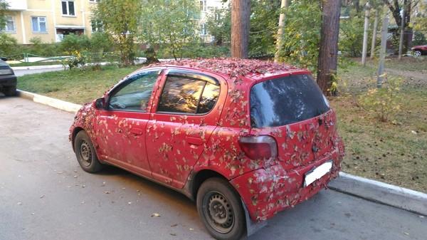 Когда отпустил гулять в лес без поводка. Авто, Машина, Листва, Листья, Осень