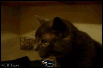 Chamber 332 -Дети котики гаечка, Никакого порно, Гифка, Длиннопост